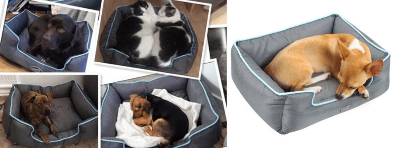 Cojines para mascotas medianas, camitas para perros medianos, top 3 camas para perros medianos