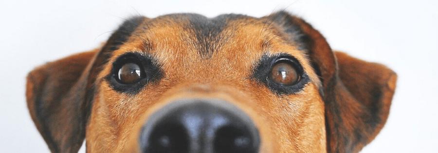 cama para perro amazon, cama perro barata, camas para mascotas, cunas para perros, tienda online de camas para perros, imágenes de cojines para perros