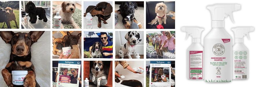 El Mejor Shampoo en Seco para Perros Profesional, Cooper And Gracie C&G Cruelty free Pet Care, el mejor champú seco para perros del mercado, el mejor champú canino del mercado